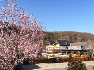 Sonnenschein Frühjahr