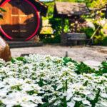 Sonnenschein Garten